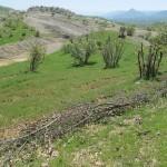 حفظ منابع طبیعی سرخس؛ نگرانی ها و چالش ها
