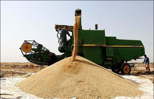 ۶۰ درصد از محصولات مزارع آبی سرخس برداشت شد/ توزیع ۳۰۰ هزار لیتر سوخت در بین کمباین داران