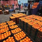 عرضه 50 تن میوه یارانه ای در سرخس/ پرتقال 1900 و سیب 1800 تومان