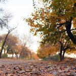 طبیعت پاییزی سرخس به روایت تصویر