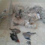 صیادان پرندگان شکاری در سرخس دستگیر شدند