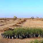 اجرای طرحهای «بیابانزدایی» در ۱۰۹۰ هکتار از اراضی سرخس/ رفع تصرف از اراضی ملی پلاک ۳ به مساحت ۴۰۰ هکتار انجام شده است/ رسیدگی به ۳۱ پرونده تخلف در عرصه منابع طبیعی
