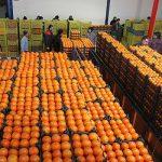 عرضه ۵۰ تن میوه شب عید در سرخس/ ۱۵ میوهفروش اعلام آمادگی کردند
