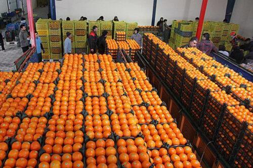 عرضه ۴۶ تن «میوه طرح تنظیم بازار» در سرخس