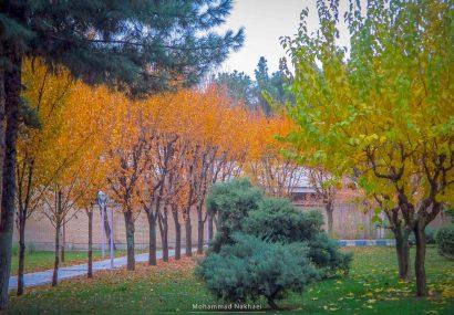 طبیعت پاییزی شهر مرزی سرخس