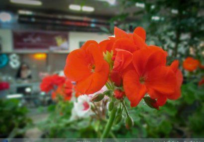 برپایی هفتمین نمایشگاه گل و گیاه در سرخس