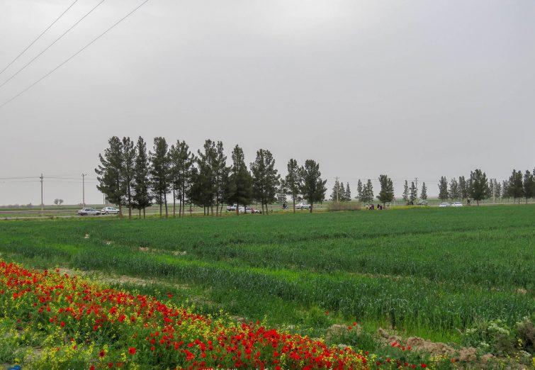 روز طبیعت در شهرستان مرزی سرخس
