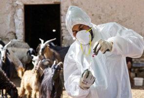 واکسیناسیون ۵۰۰۰۰ دام علیه بیماری طاعون در سرخس
