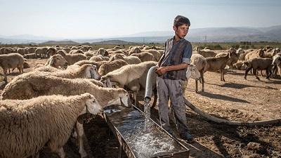 تاکنون هیچگونه درخواستی از سوی جهاد کشاورزی سرخس برای آب شرب دام نداشتیم