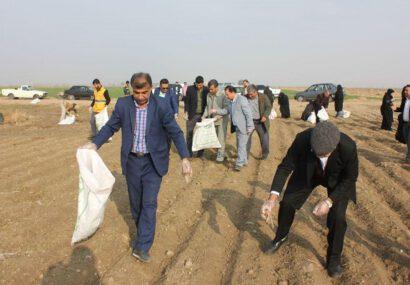 پلاستیک جالیز مزارع آستان قدس رضوی پاکسازی شد