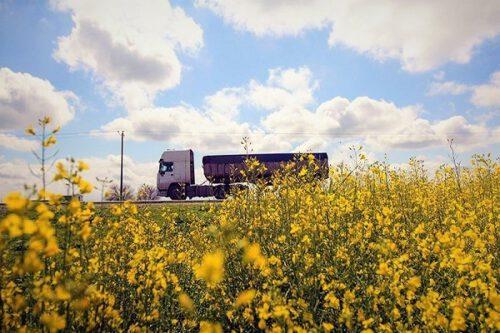 توسعه ۱۰۰ درصدی کشت دانه روغنی کلزا در سرخس/ ۱۰۰۰ تن کلزا امسال از اراضی سرخس برداشت میشود