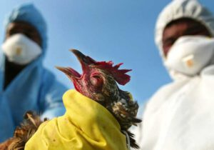 شیوع آنفولانزای حاد پرندگان در یکی از روستاهای سرخس