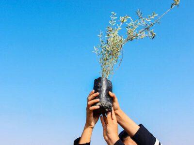 غرس ۴۵۰۰ اصله درخت در پویش «هر سرخسی یک درخت»